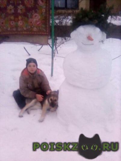Пропала собака г.Калуга