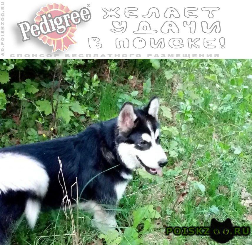 Пропала собака кобель г.Саранск