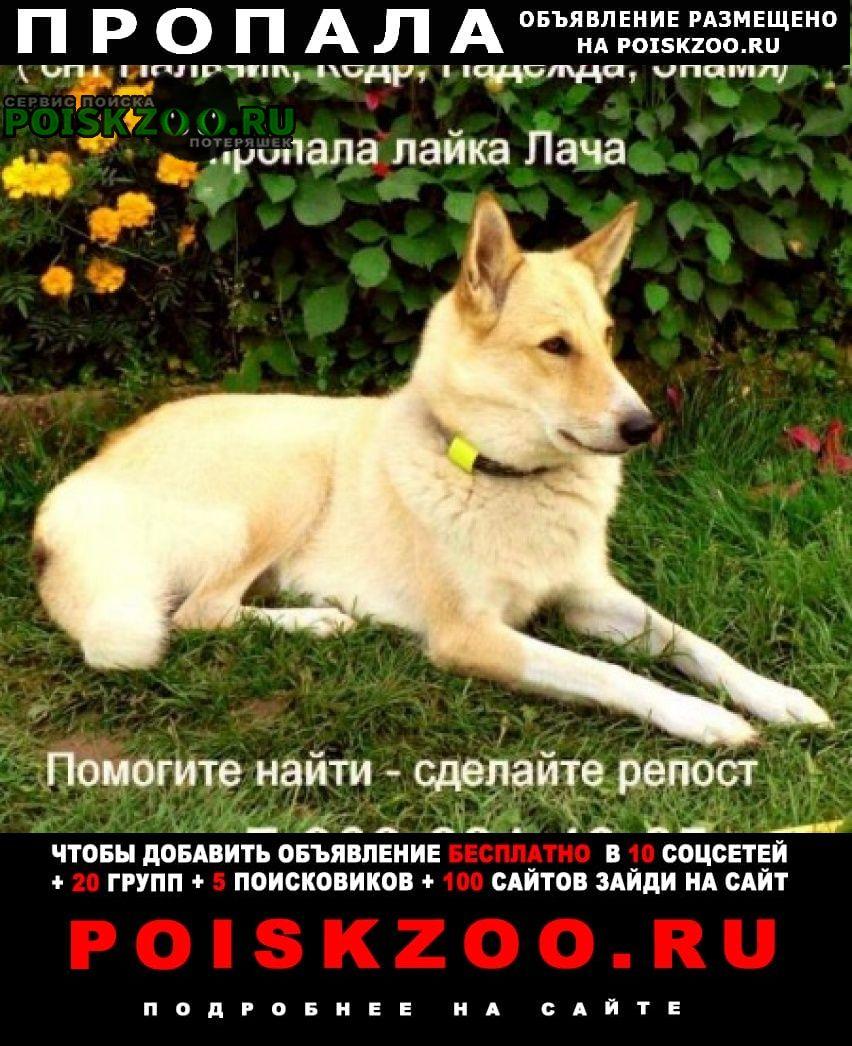 Пропала собака лайка потерялась Истра