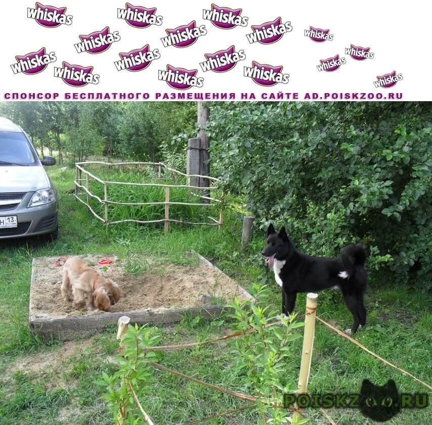 Пропала собака кобель любимая собака  г.Саранск
