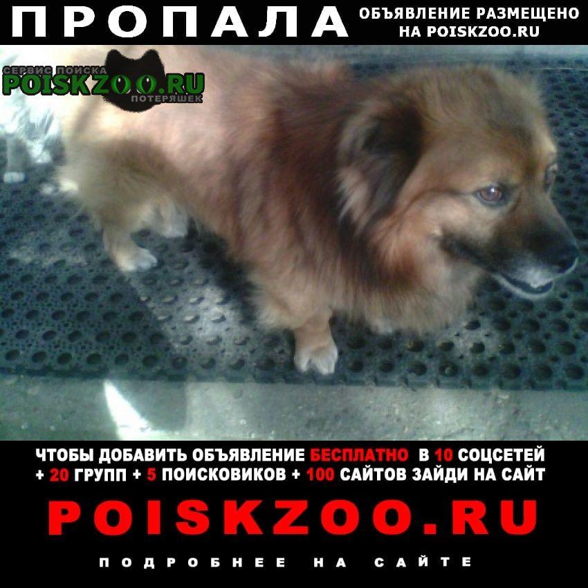 Пропала собака Гродно