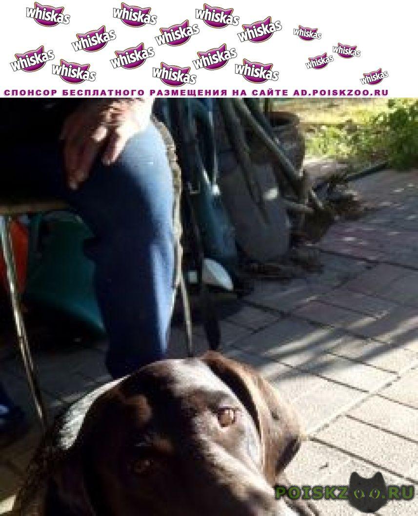 Пропала собака кобель г.Бахчисарай