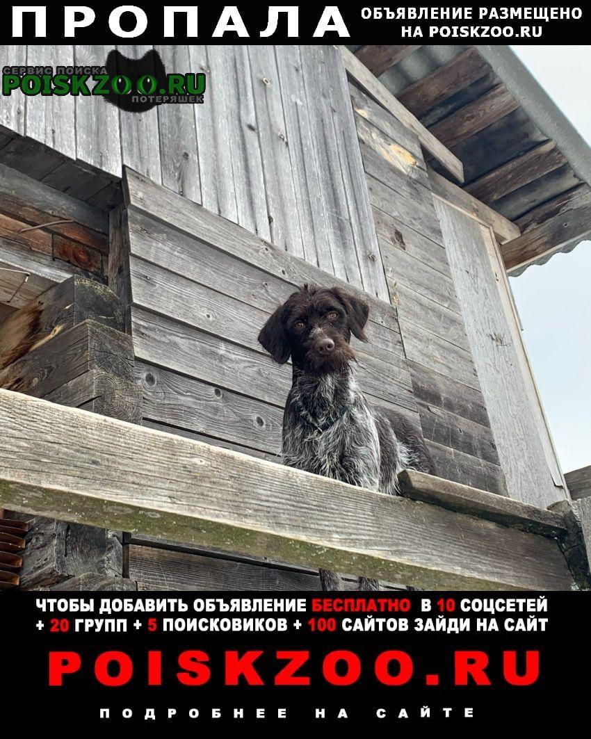 Инжавино Пропала собака