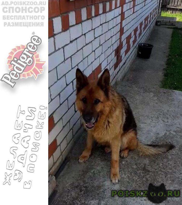 Пропала собака кобель кличка сешка г.Нижний Новгород