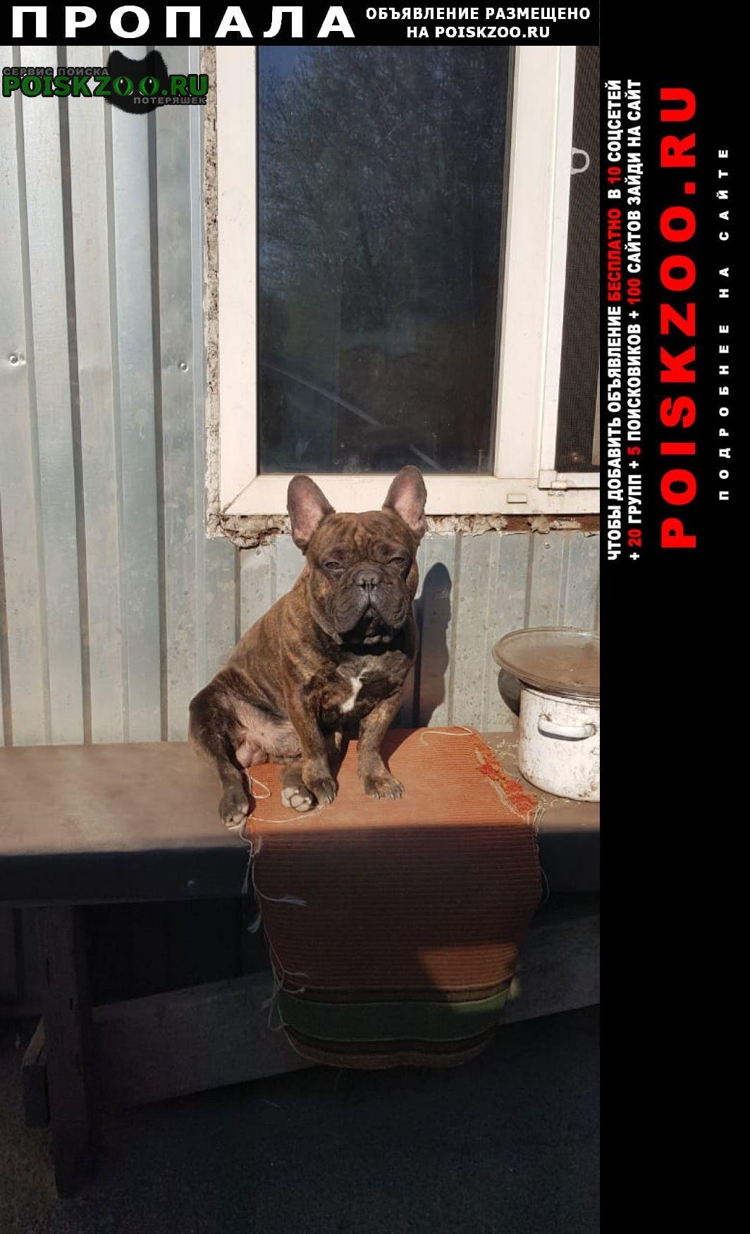 Пропала собака помогите найти Железногорск Курская обл.