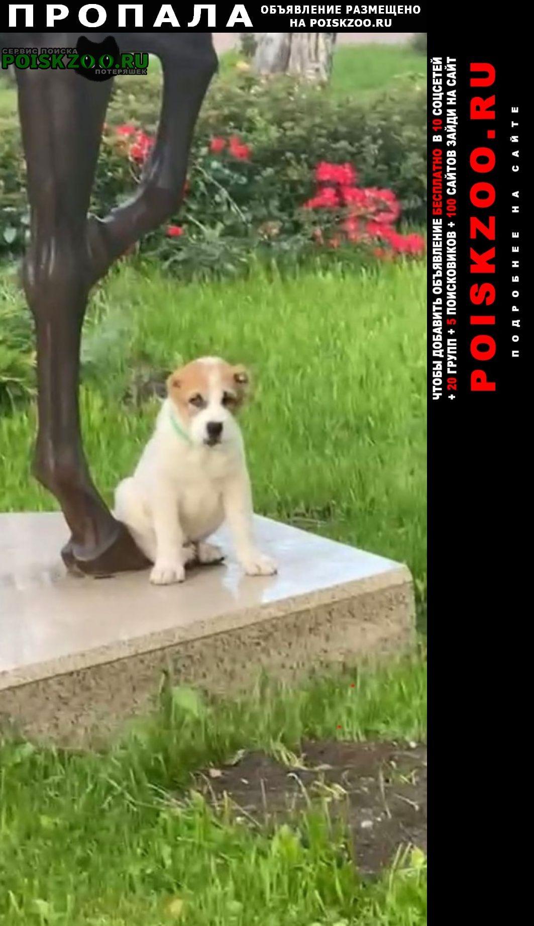 Пропала собака кобель порода алабай Чехов