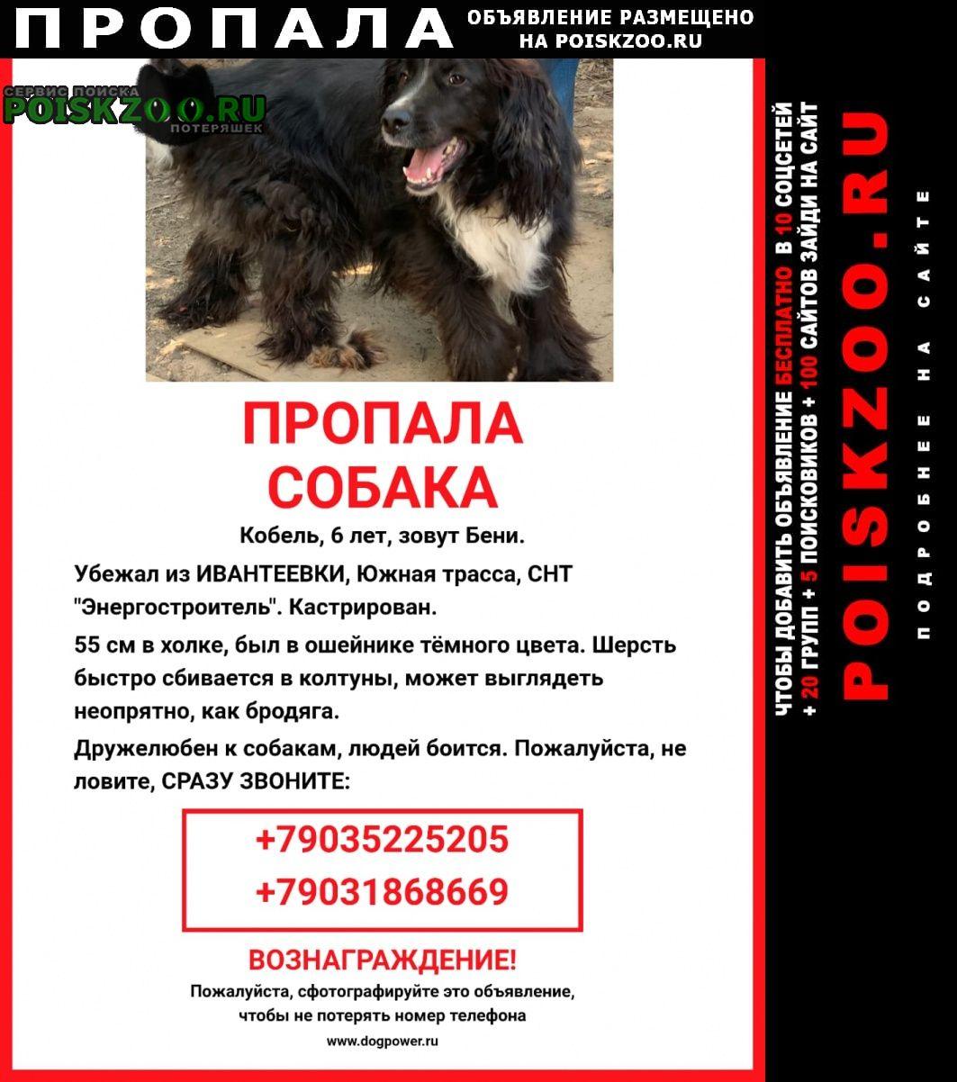 Ивантеевка (Московская обл.) Пропала собака кобель
