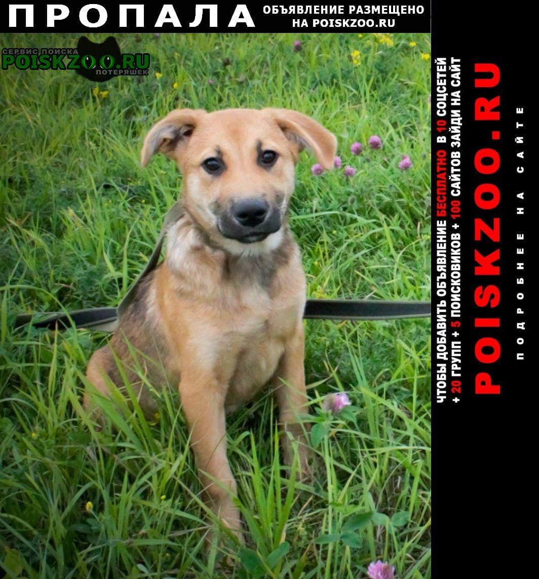 Великий Новгород (Новгород) Пропала собака