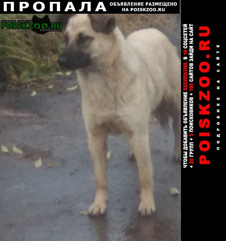 Давлеканово Пропала собака -белла 8 мес