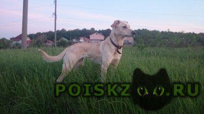 Пропала собака г.Новосибирск