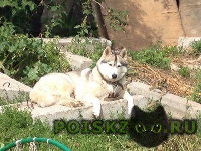 Пропала собака помогите найти собаку г.Казань