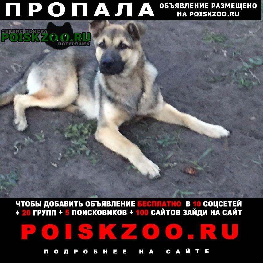 Волжский (Самарская обл.) Пропала собака