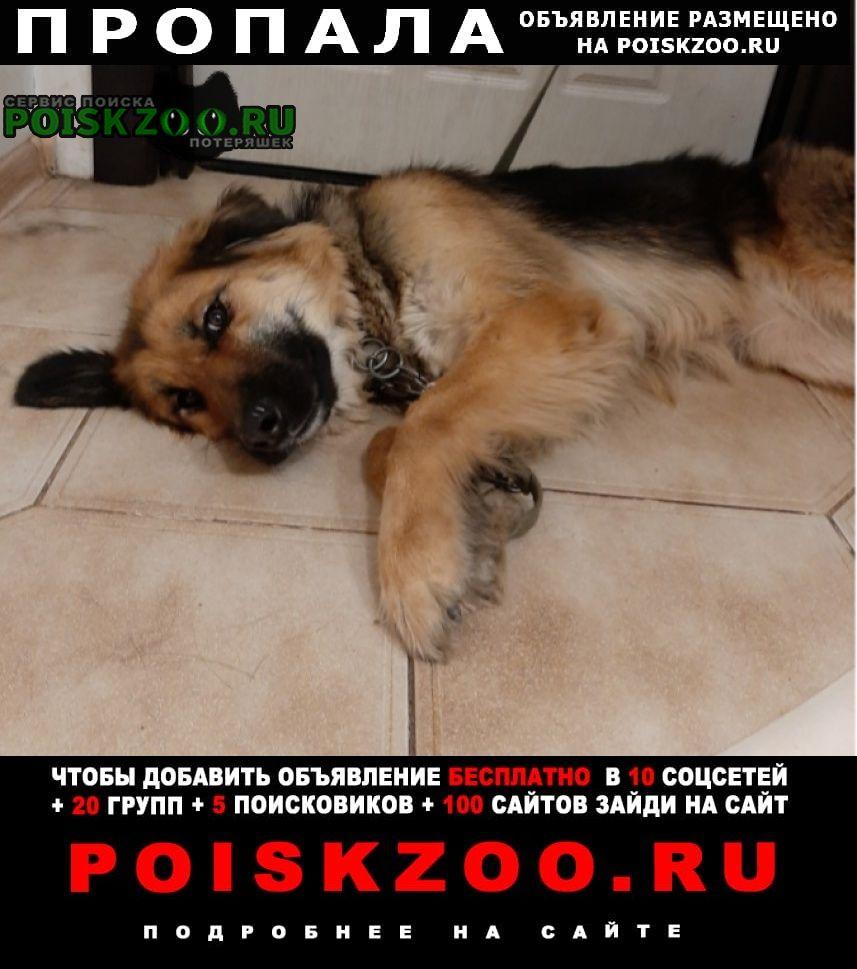 Пропала собака кличка джина Купавна