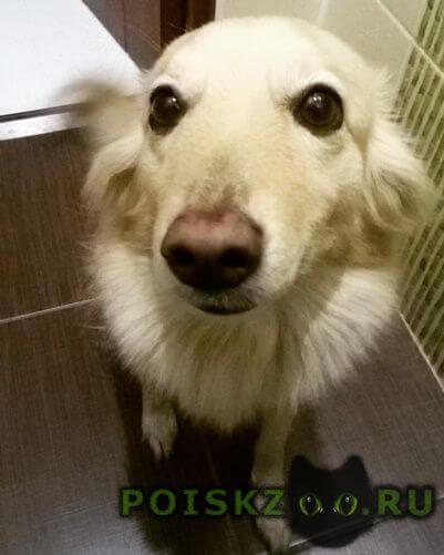 Пропала собака г.Спасск-Рязанский