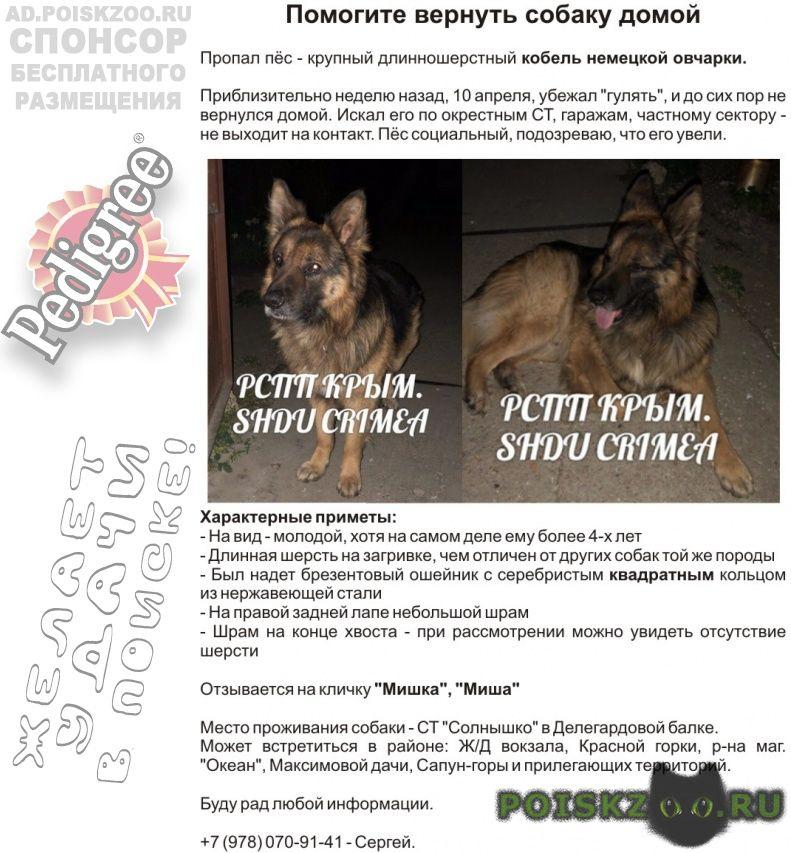 Пропала собака кобель г.Севастополь