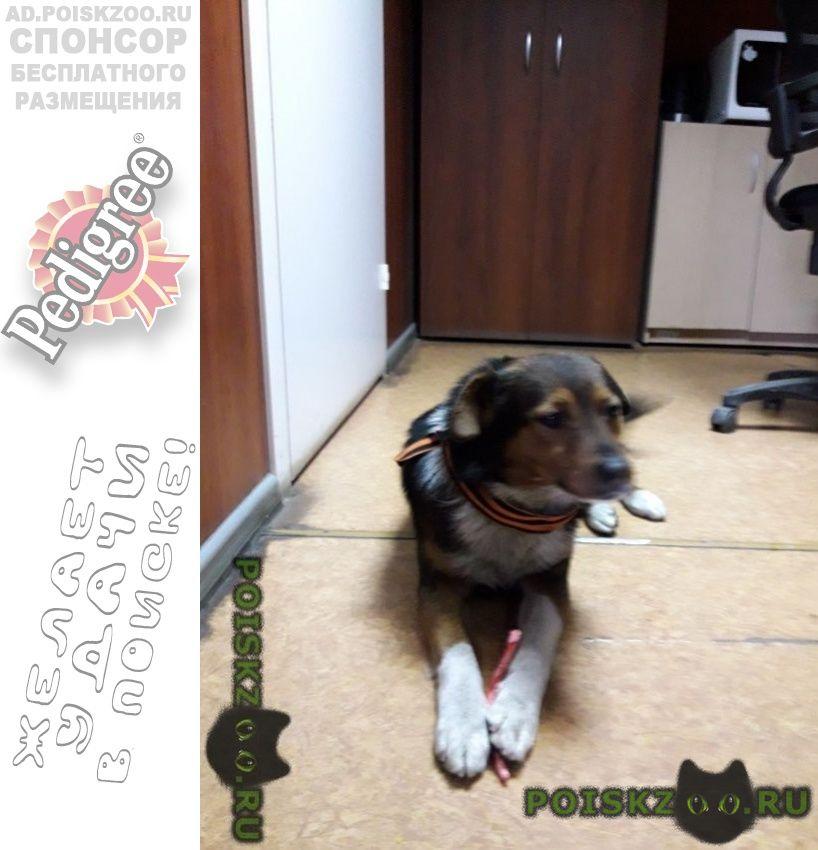 Пропала собака кобель ищем собаку г.Москва