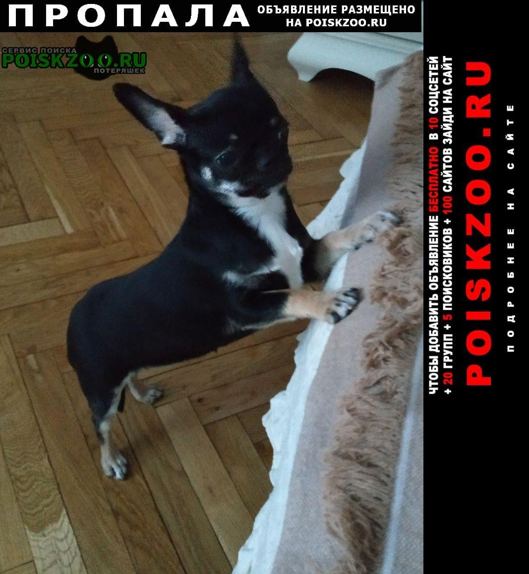 Пропала собака чиахуа Москва