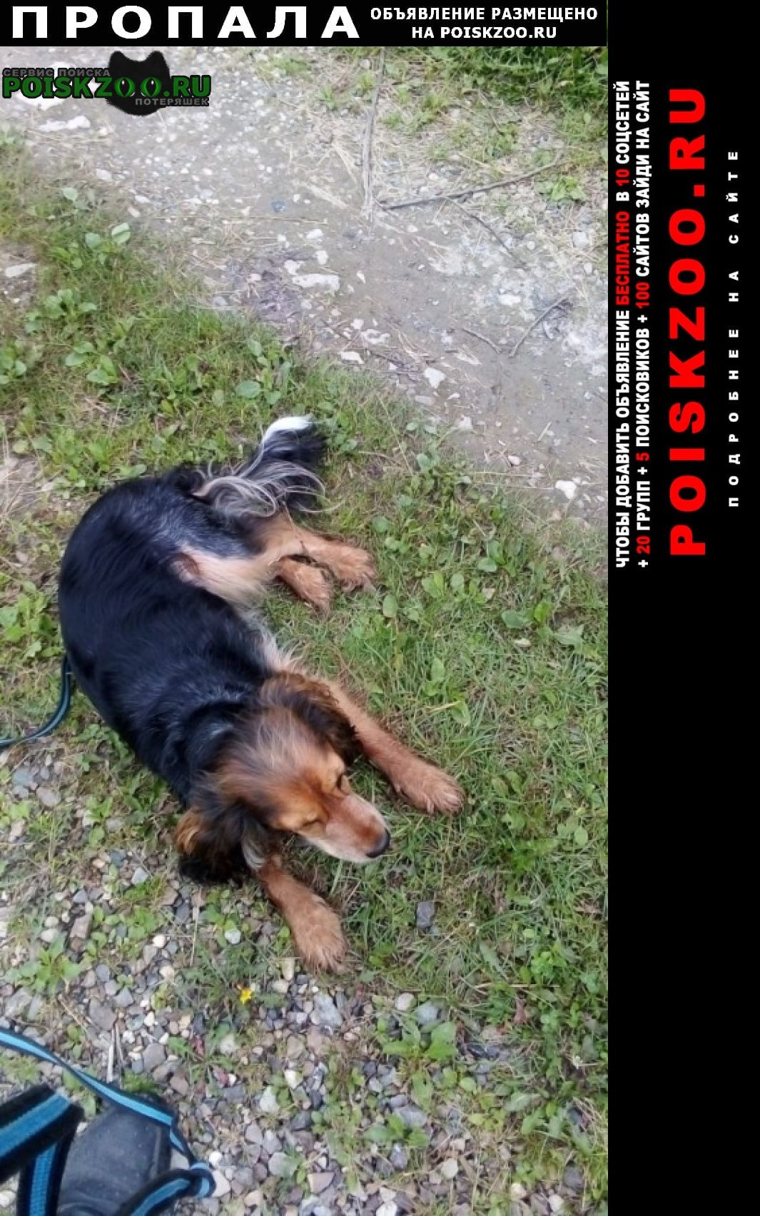 Пропала собака Коломна