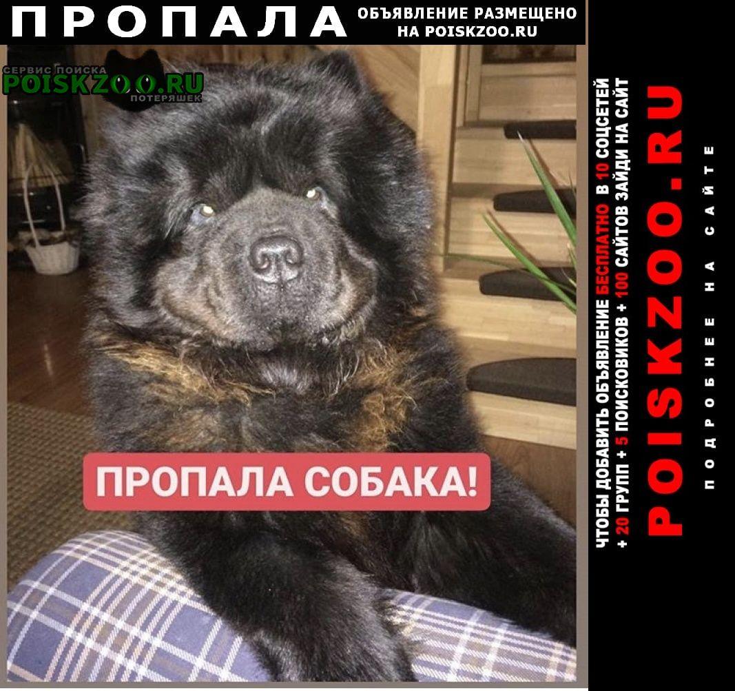 Пропала собака просим помощи в поиске друга Софрино