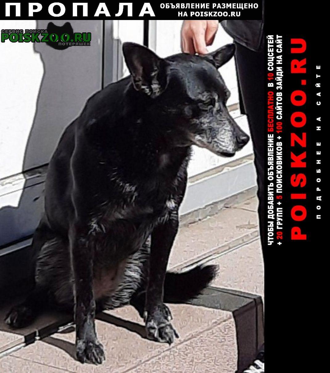 Пропала собака возле дома абрикосовая 20 на макаренко Сочи
