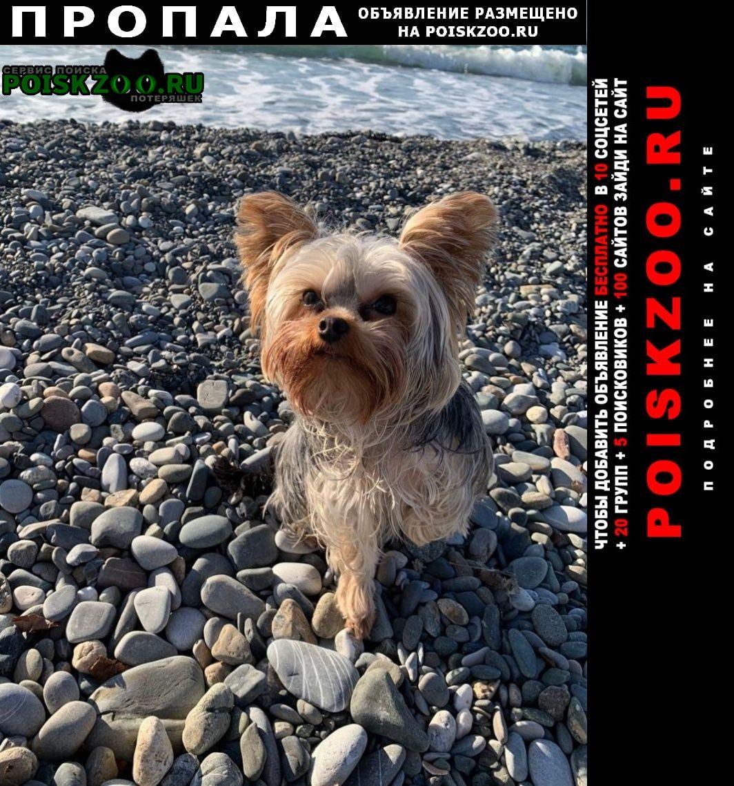 Москва Пропала собака кобель йорк, 10 марта, ленинский пр