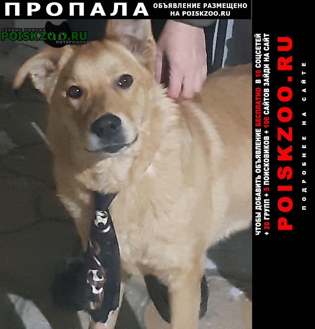 Пропала собака кобель взморье Волжский (Волгоградская обл.)