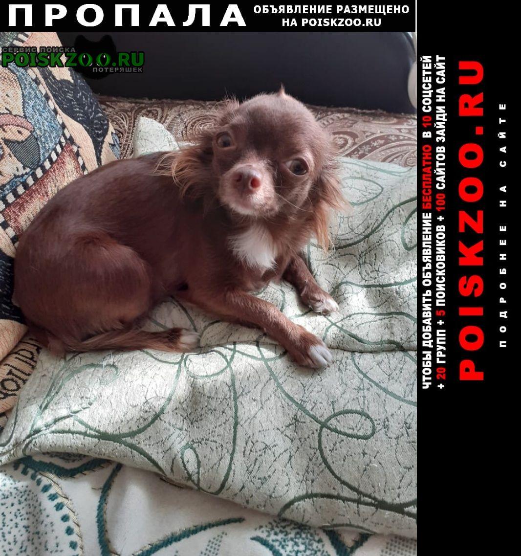 Пропала собака Геленджик
