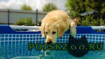 Пропала собака кобель товарищи у меня потерялась собака г.Москва