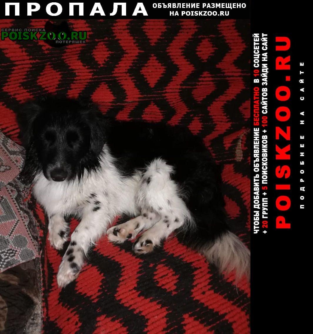 Пропала собака кобель ищем собаку Яшкино
