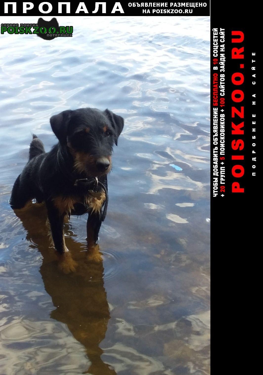 Пропала собака Подосиновец