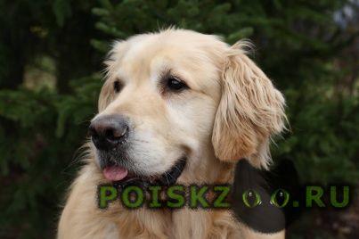 Пропала собака кобель в мисхоре г.Ялта