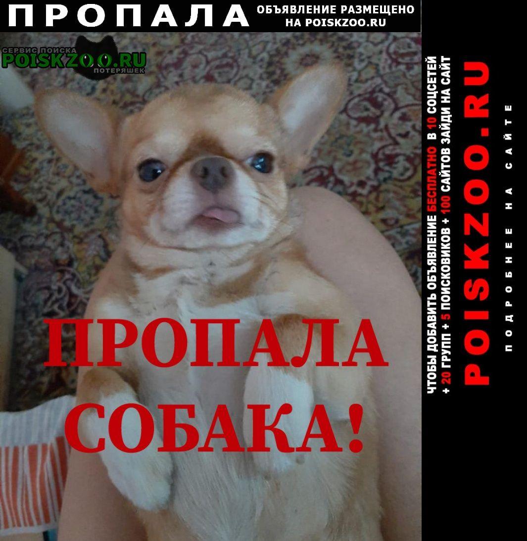 Пропала собака кобель Прокопьевск