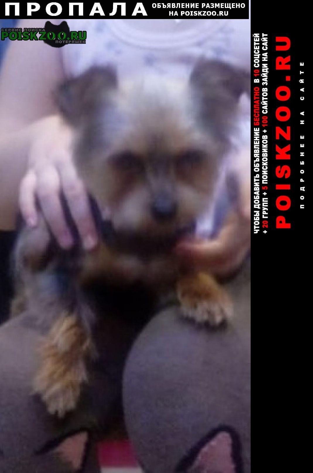 Пропала собака Егорьевск