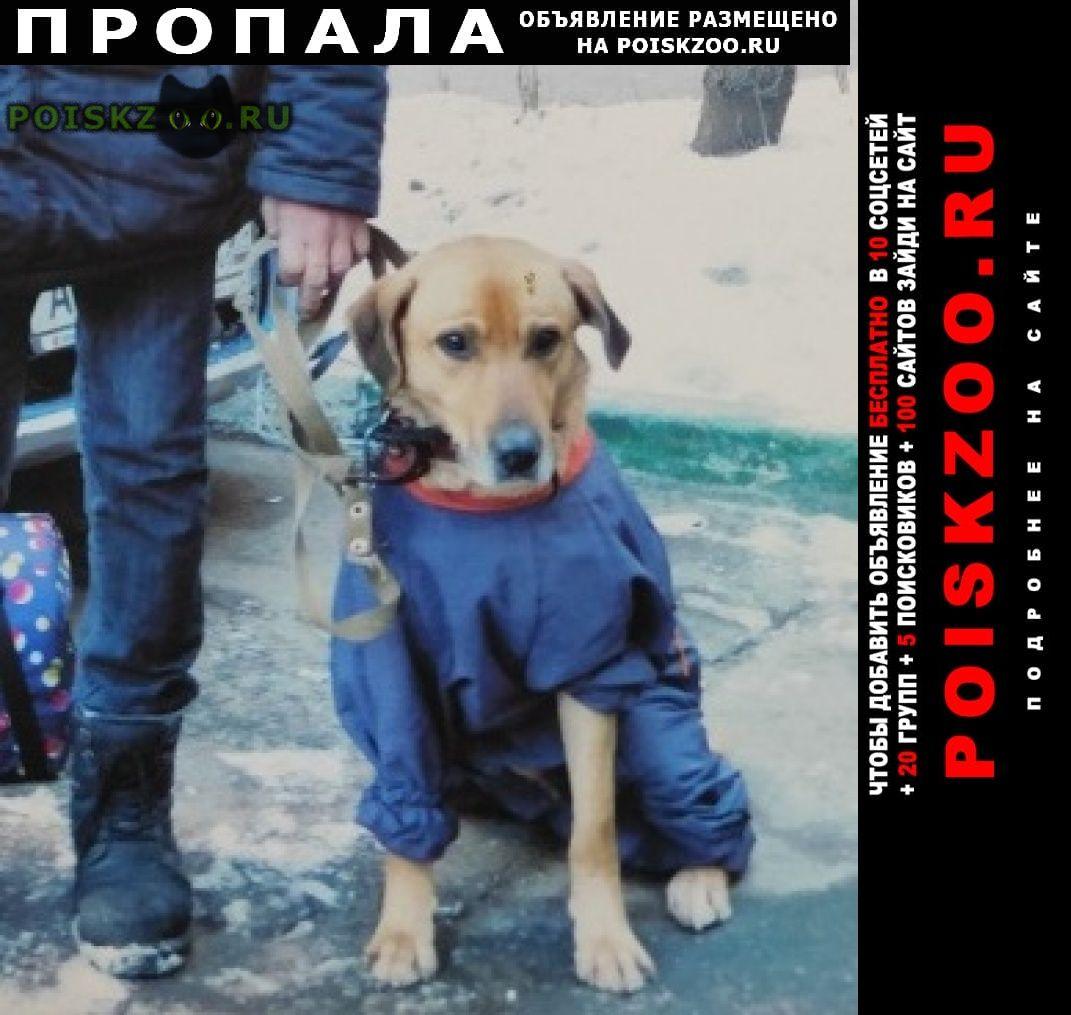 Пропала собака кобель на зелёной ветке г.Москва