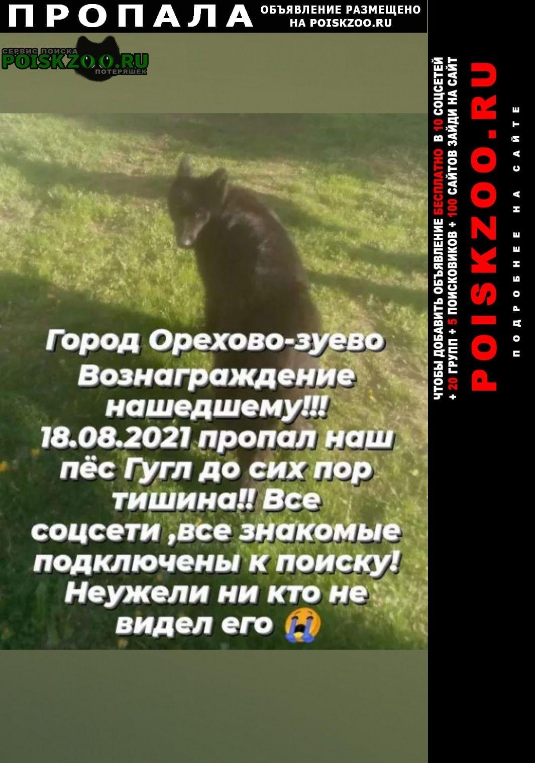 Пропала собака кобель вознаграждение гарантированно Орехово-Зуево