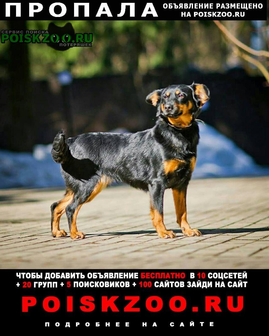 Пропала собака 29 мая, вышла на станции голицыно Голицыно (Московская обл.)