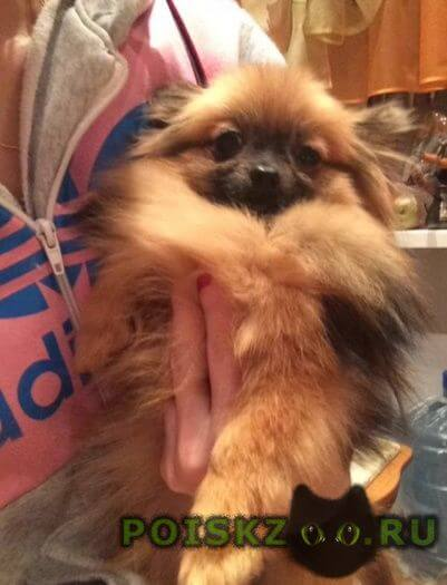 Пропала собака помогите найти собаку г.Тольятти