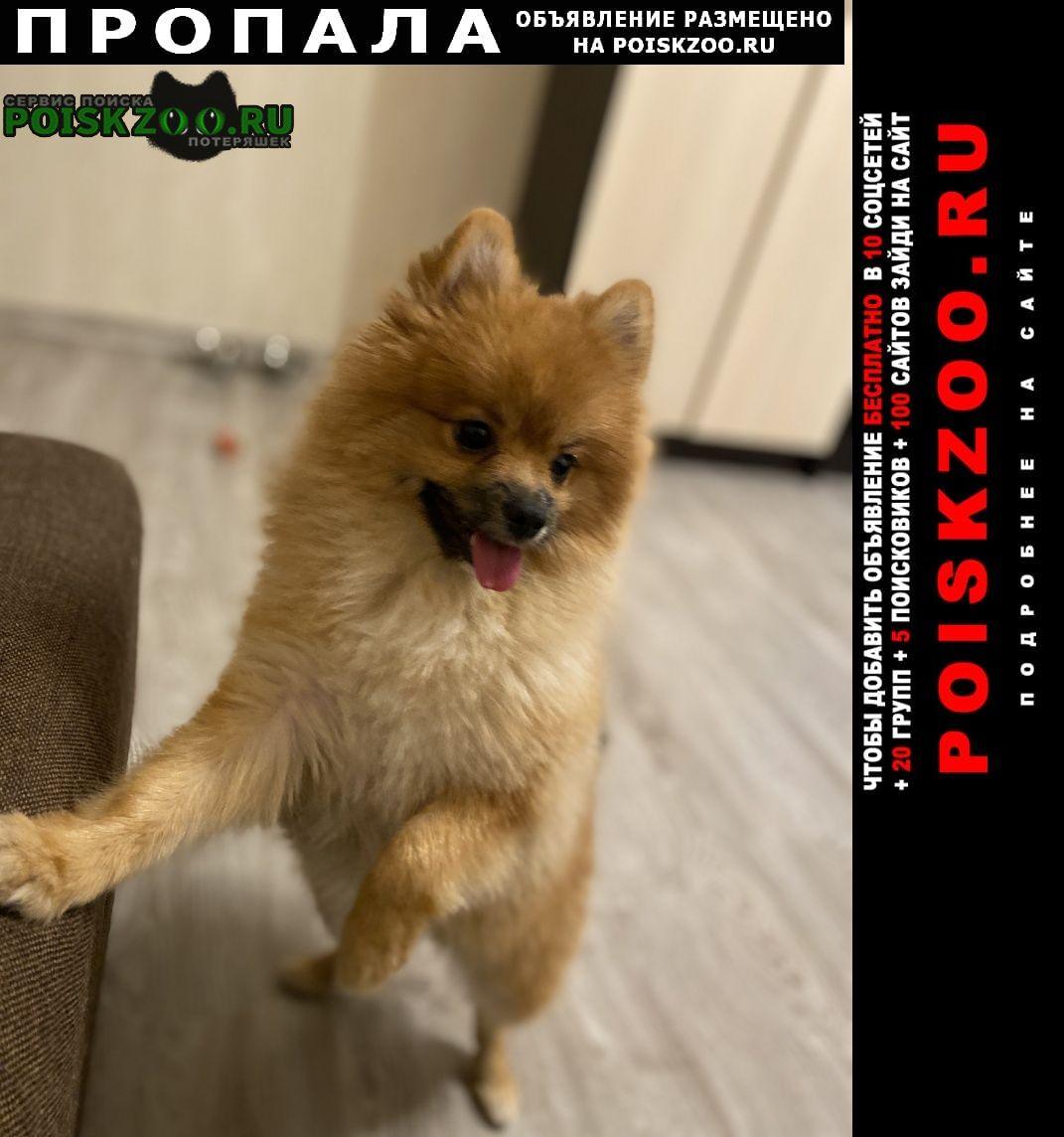 Пропала собака кобель Краснодар