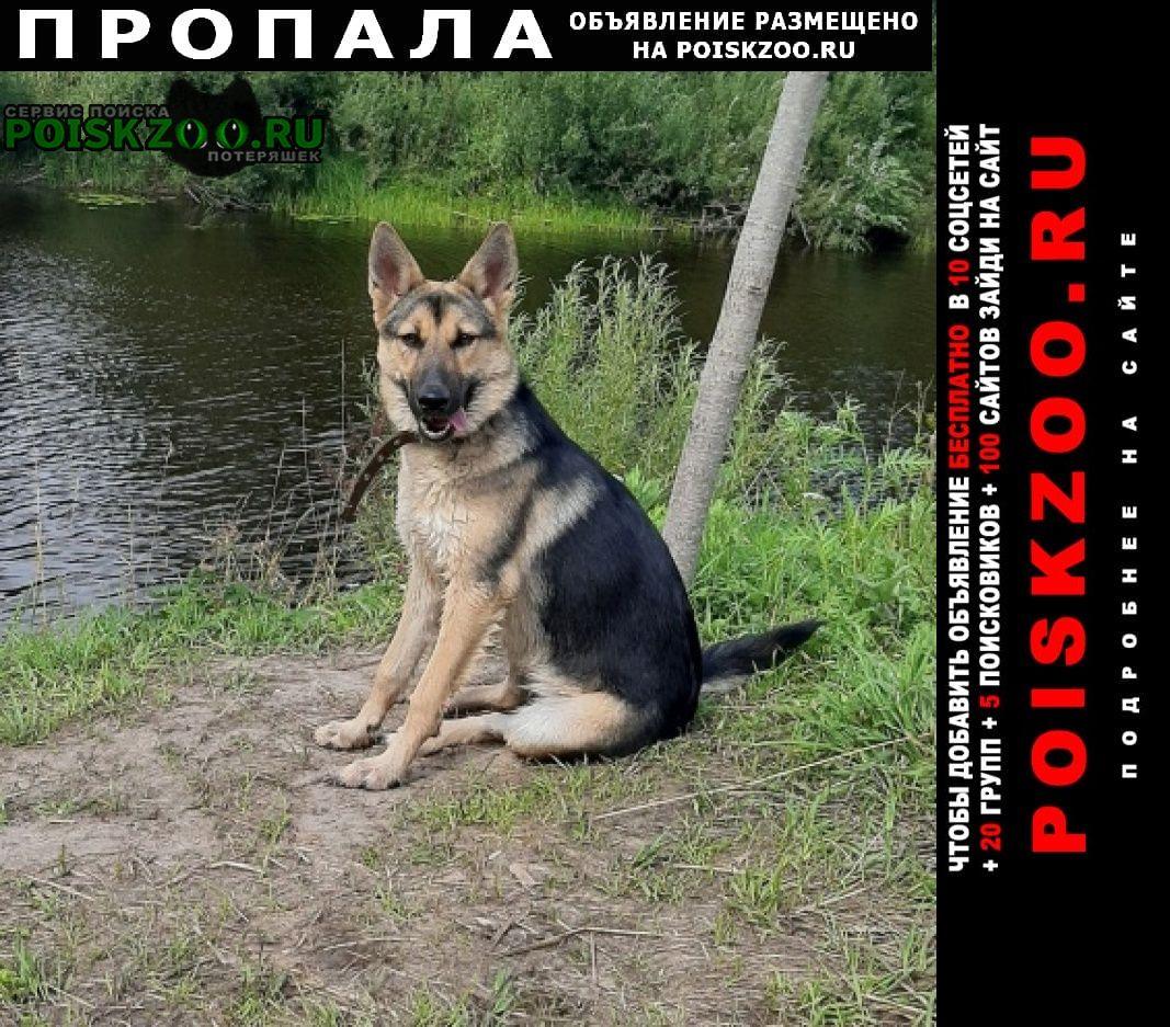 Архангельск Пропала собака