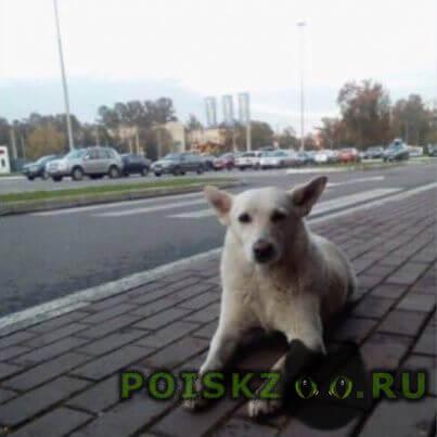 Пропала собака белая г.Санкт-Петербург