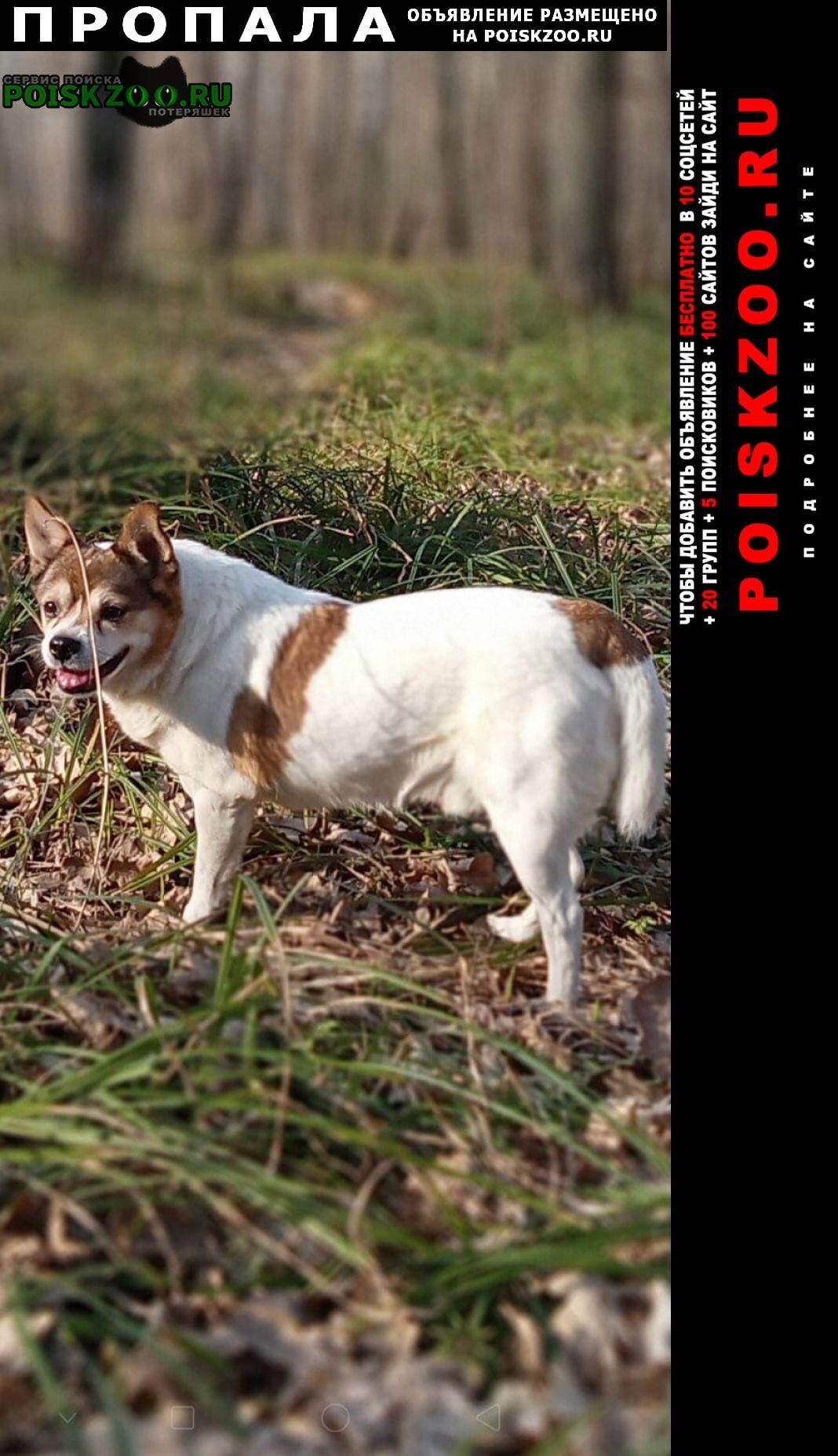 Пропала собака кобель Спасское