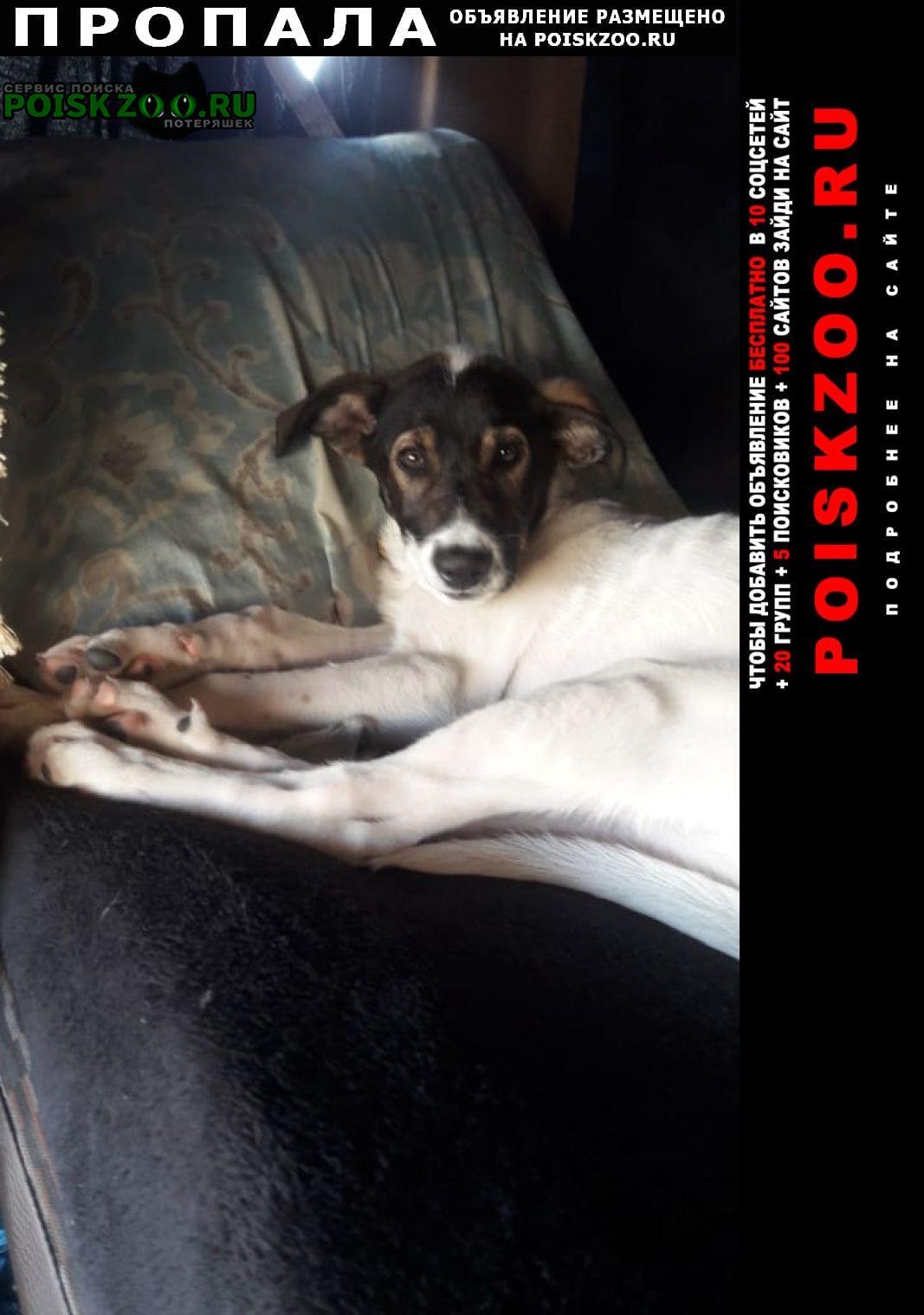 Пропала собака за вознограждение Моршанск