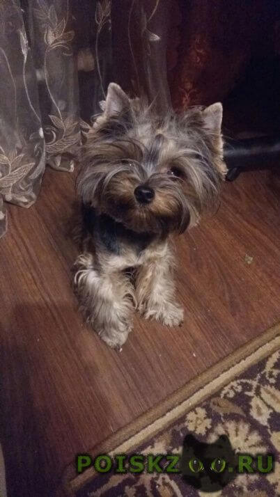 Пропала собака помогите найти собаку г.Люберцы