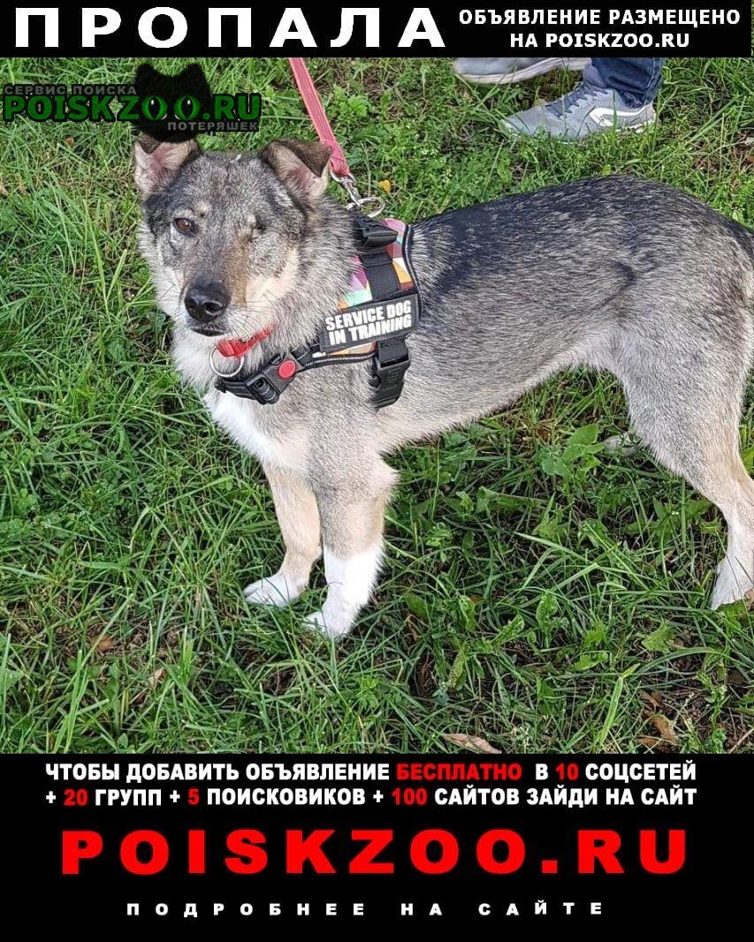 Пропала собака одноглазая серая девочка Москва
