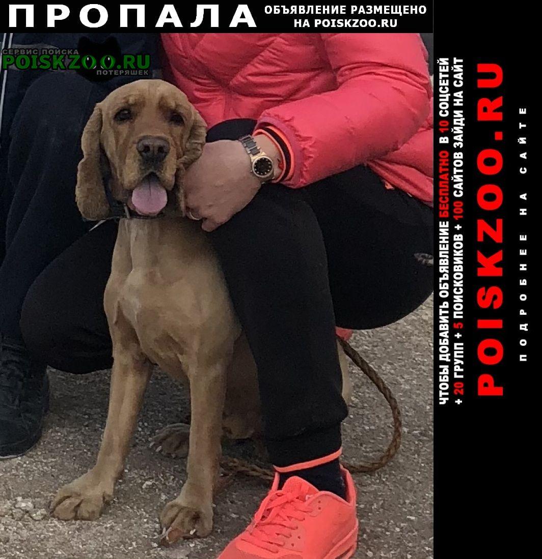 Пропала собака срочно Рамонь