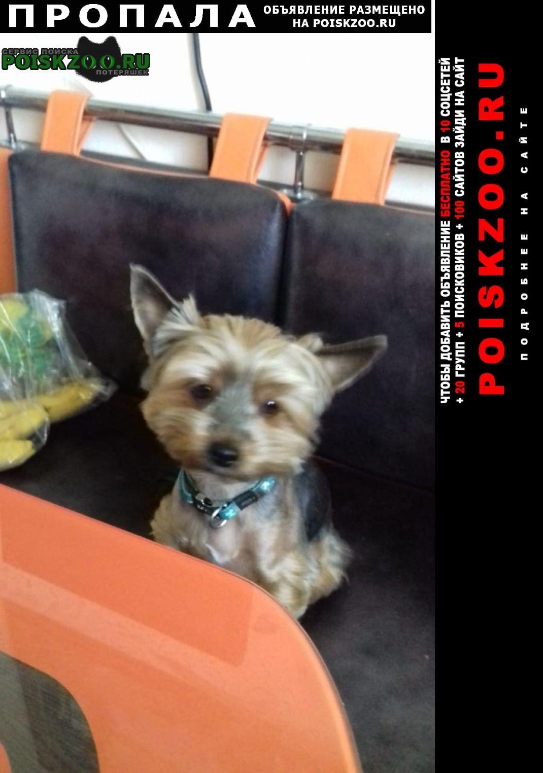 Пропала собака йорк Москва