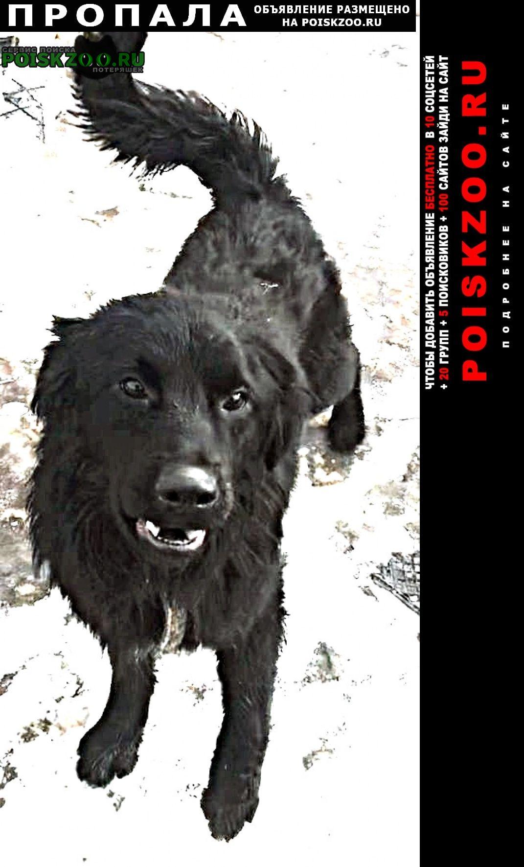 Пропала собака кобель помогите найти Белгород