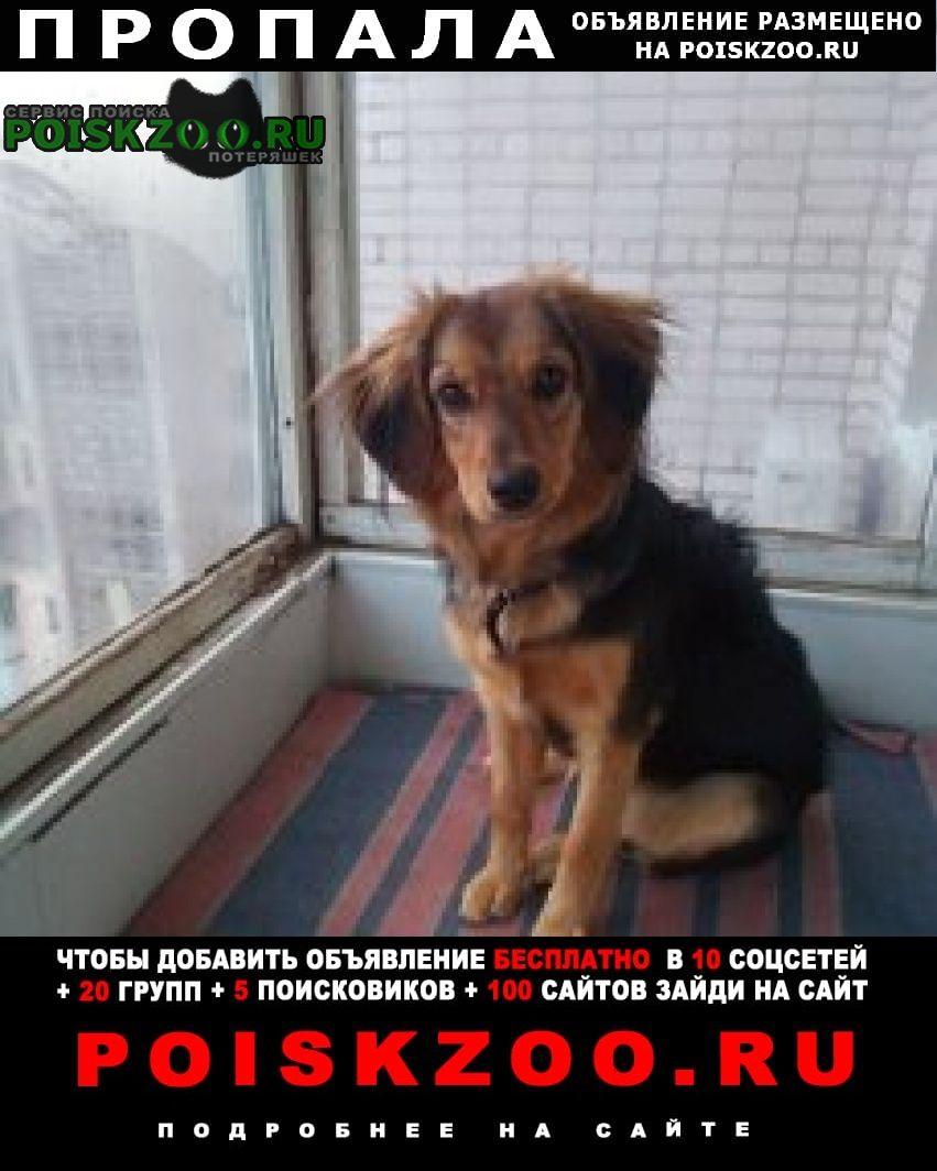 Пропала собака лучший друг. Луганск
