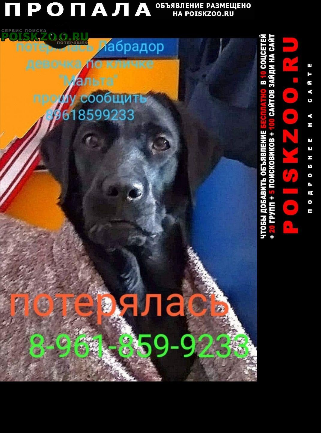 Пропала собака лабрадор девочка Краснодар