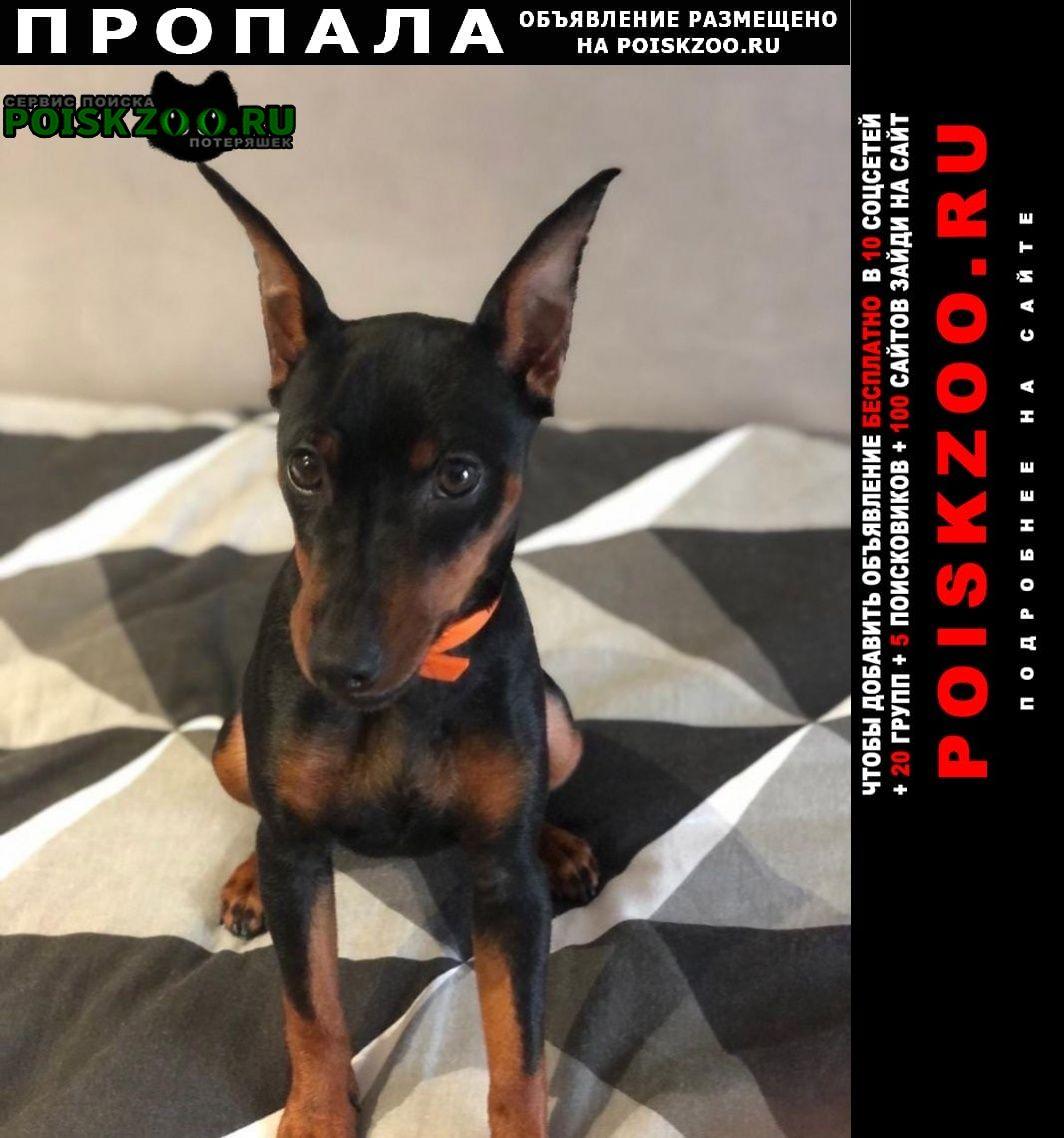 Пропала собака невский район Санкт-Петербург